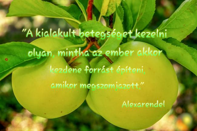 Alexarendel/Workshopok